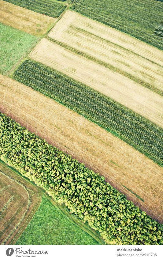 erdfarben Umwelt Natur Landschaft Pflanze Tier Erde Herbst Blume Gras Blatt Blüte Grünpflanze Nutzpflanze Wildpflanze Maisfeld Weizenfeld Hafer Ackerbau