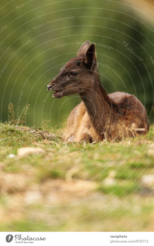 Natur schön grün Landschaft Tier dunkel Wald Gesicht Herbst Gras natürlich braun Park wild Baby Fotografie