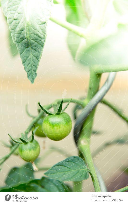 wachse tomate Stadt Pflanze grün Sommer Freude Gesundheit Garten Lebensmittel Wohnung Lifestyle Stadtleben Häusliches Leben frei Ernährung Blühend Gemüse