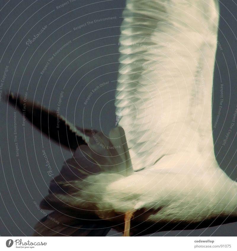 going gull Wege & Pfade Vogel Angst gehen fliegen gefährlich Panik Tier Lachmöwe