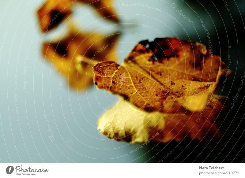 Spiegelung Umwelt Natur Pflanze Himmel Sommer Herbst Schönes Wetter Baum Sträucher Blatt Grünpflanze Garten Park Wiese Wald alt blau braun gelb Gefühle Stimmung