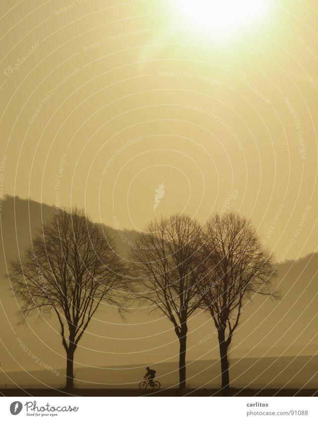 .. noch'n zett Baum Sonne Landschaft Berge u. Gebirge Fahrrad Nebel Freizeit & Hobby Hügel Fahrradfahren Allee blenden unterwegs ländlich Landstraße Monochrom Fahrradweg