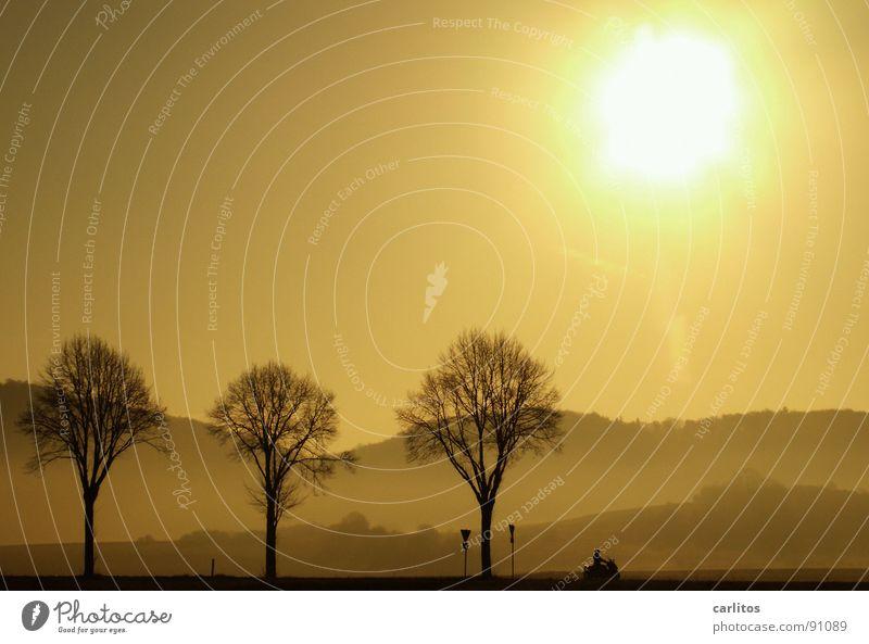 aber der fährt Roller! Allee Landstraße Bundesstraße Morgen Morgennebel Sonnenaufgang Gegenlicht blenden Baum Silhouette Hügel Abstufung Kleinmotorrad