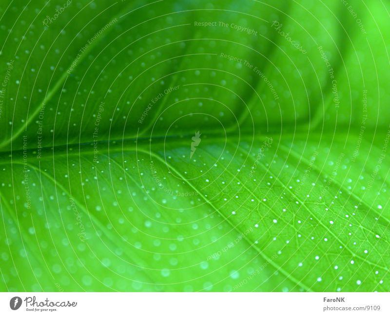 Grün grün Pflanze Blatt