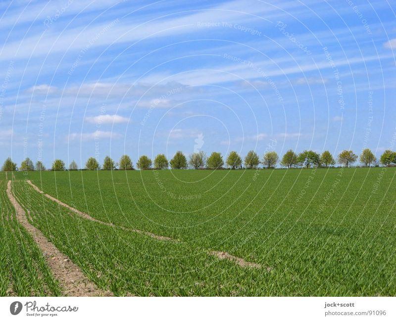 Beschaulichkeit (Wolken beobachten) Landschaft Frühling Klima Schönes Wetter Baum Feld Sammlung authentisch einfach frisch blau Idylle Wachstum ländlich Spuren