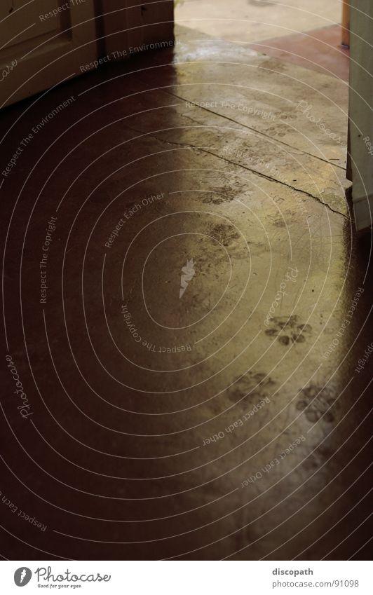 Hund gekommen Pfote schreiten Fährte Beton glänzend Eingang Afrika Säugetier Spuren Gassi Stein Schatten Ruanda trace steps stone stroll dog concrete paws door