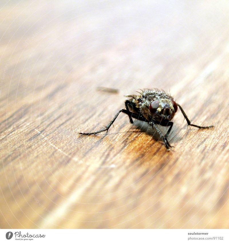 Can't Walk... Fliege Insekt Holz Tisch braun Geschwindigkeit Tier Makroaufnahme Tiefenschärfe Unschärfe Quadrat Momentaufnahme Eintagsfliege weiß schwarz