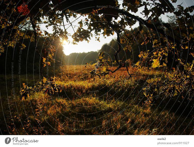 Herbst in Niedersachsen Umwelt Natur Landschaft Pflanze Himmel Horizont Klima Wetter Schönes Wetter Baum Gras Sträucher Wildpflanze Eichenblatt Wiese