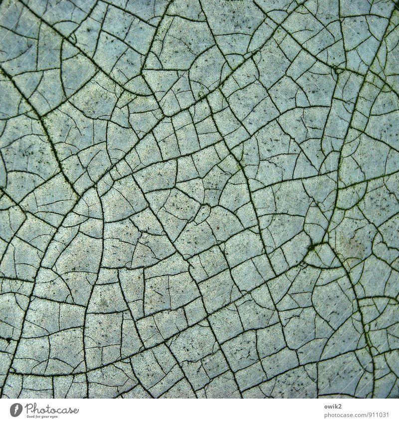 Trockenzeit alt Farbe ruhig Linie Vergänglichkeit trocken Kunststoff Teile u. Stücke verfallen Verfall Riss Zerstörung dehydrieren Bruchstück Pore abstrakt