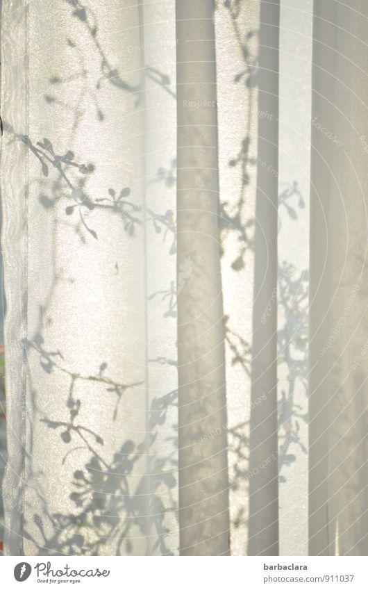 verborgen Wohnung Raum Gardine Vorhang Pflanze Ranke Topfpflanze Fenster Textilien Linie Faltenwurf Wachstum außergewöhnlich hell grau weiß Stimmung