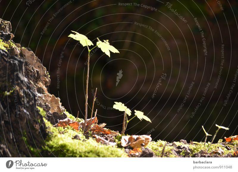 Geschwister Natur Landschaft Pflanze Erde Herbst Gras Moos Blatt Grünpflanze Park Wachstum dunkel frisch Zusammensein groß hell klein grün Leben Sinnesorgane