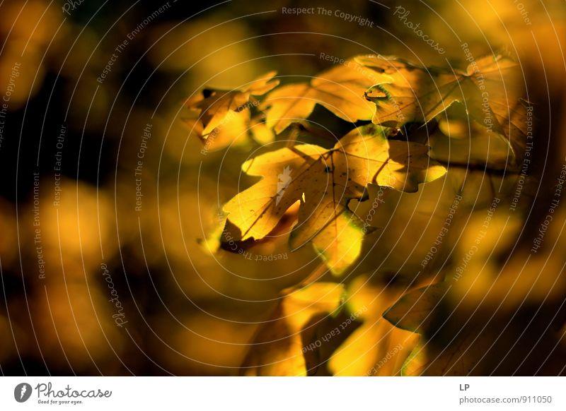 Galben Umwelt Natur Landschaft Pflanze Herbst Blatt Grünpflanze glänzend genießen leuchten alt ästhetisch mehrfarbig gelb Gefühle Freude Zufriedenheit schön