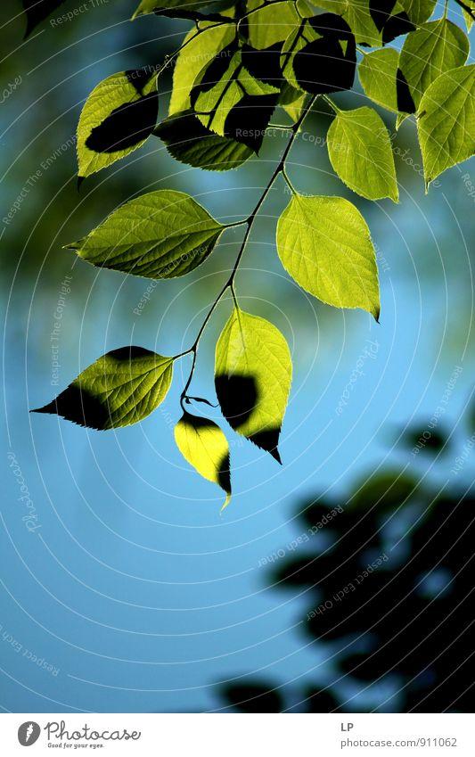 Natur blau Pflanze grün Landschaft Blatt Umwelt Garten Park Grünpflanze friedlich