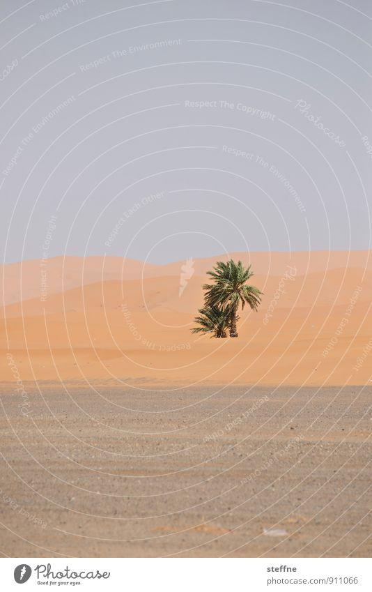 Bäume (3/8) Natur Baum Umwelt Sand Wachstum Klima Wüste Palme ökologisch Sauerstoff Oase Marokko