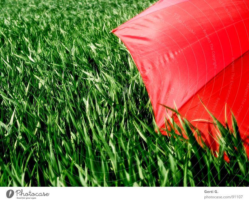 abgeschirmt charmant Sonnenschirm Schutzausrüstung Regenschirm rot Sommer Feld Kornfeld frisch mehrfarbig grün-rot Landwirtschaft Wind Halm Bewegung