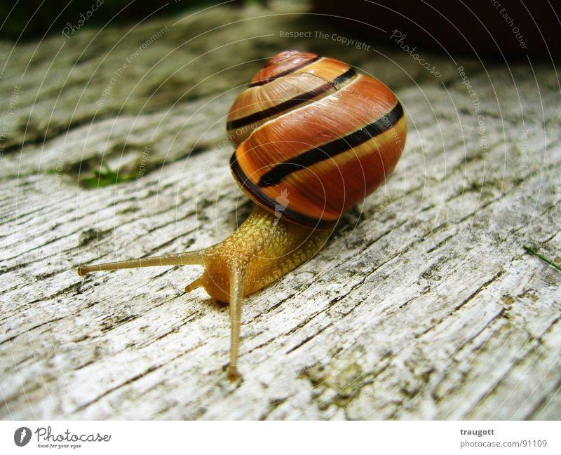 Schnecke Natur Tier Pause langsam schleimig Schneckenhaus