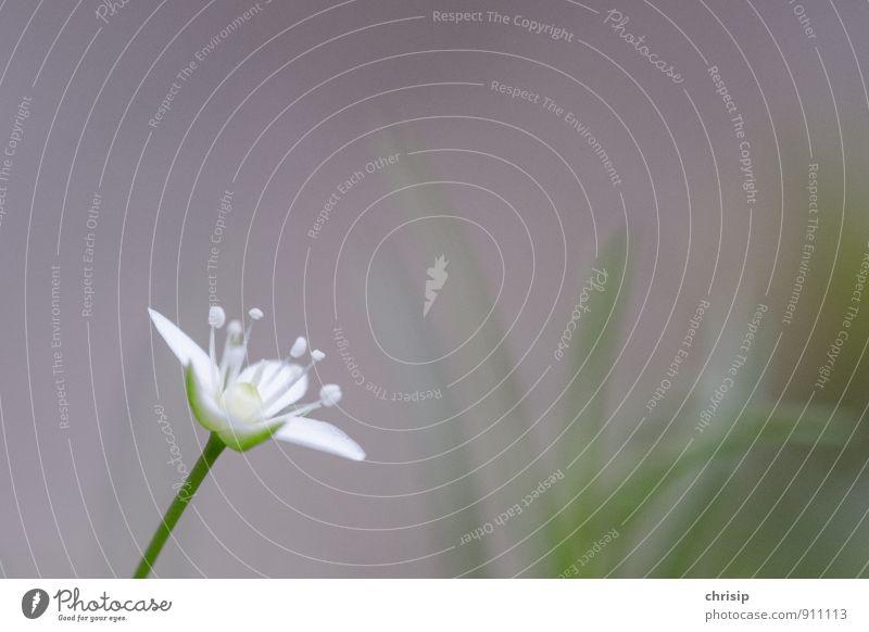 \|/ Natur Pflanze schön grün weiß Sommer Blume Blatt Umwelt Herbst Blüte Frühling grau klein elegant leuchten