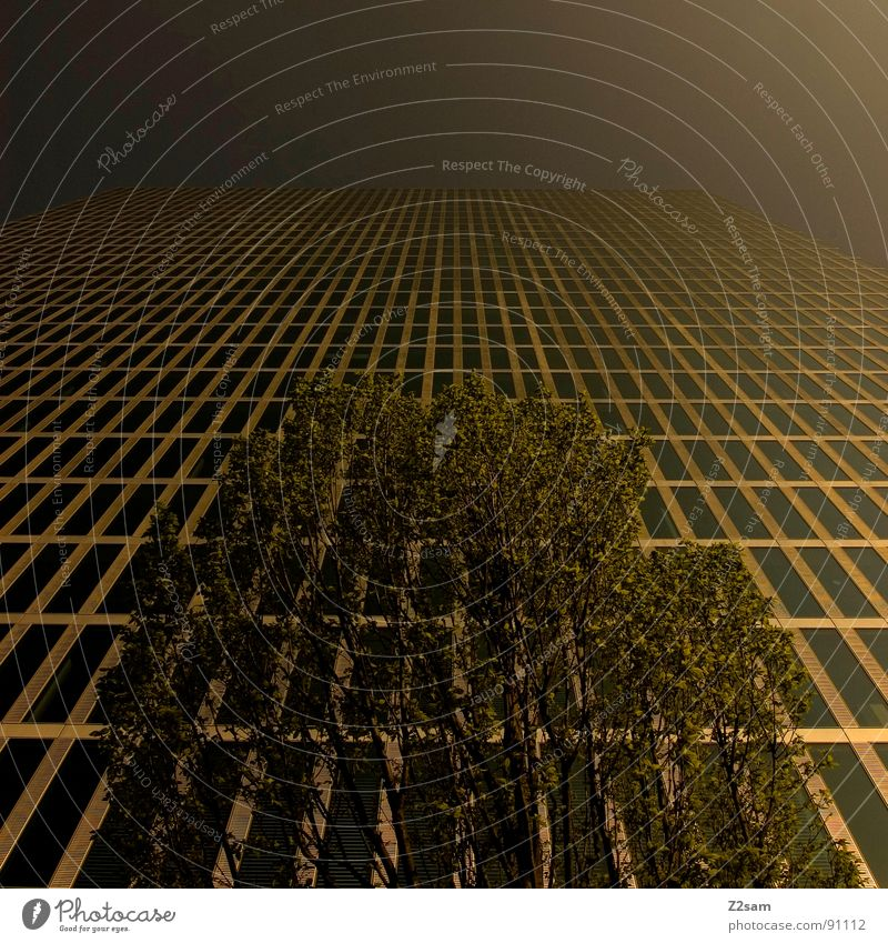 hoch hinaus Baum Wachstum Hochhaus Gebäude Haus Fenster Etage Blatt Himmel Verlauf abstrakt Architektur aufwärts Natur Ast sky modern Stadt Perspektive