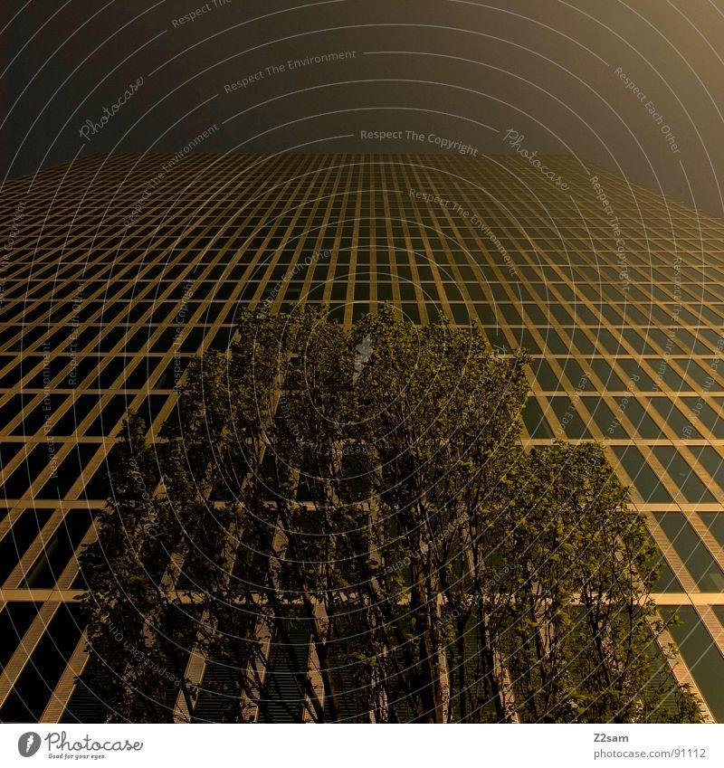 hoch hinaus Natur Himmel Baum Stadt Blatt Haus Fenster Gebäude Architektur Hochhaus hoch Perspektive modern Wachstum Ast Etage