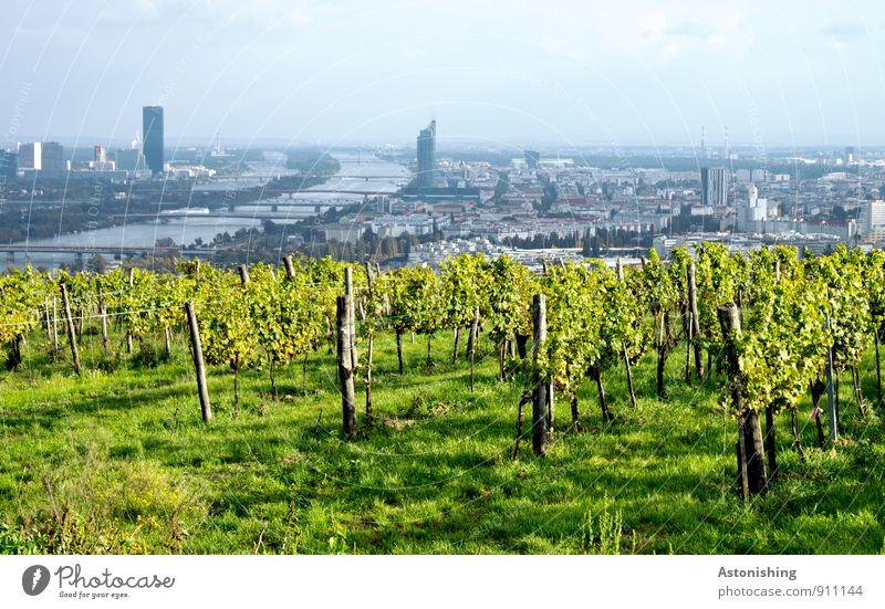 Blick auf Wien Himmel Natur blau Stadt Pflanze grün weiß Blatt Landschaft Wolken Haus Ferne Umwelt Herbst Gras Luft