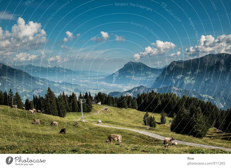 St. Galler Rheintal II Umwelt Natur Landschaft Pflanze Tier Erde Himmel Wolken Baum Wiese Feld Wald Hügel Felsen Alpen Berge u. Gebirge Gipfel Kuh Tiergruppe