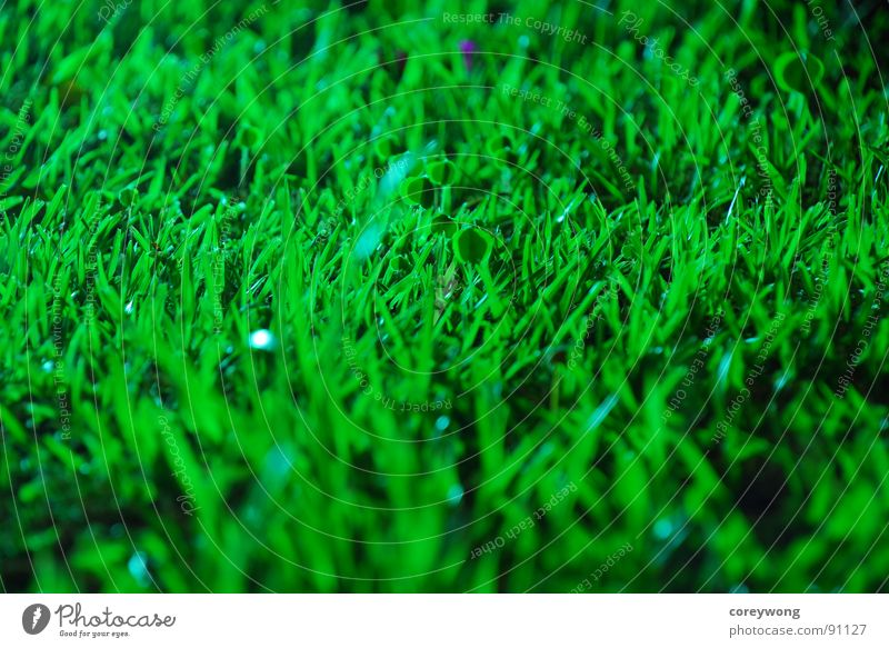 fresh, Grass, green herb grass at night long exposure black wet humid back light morning energetic
