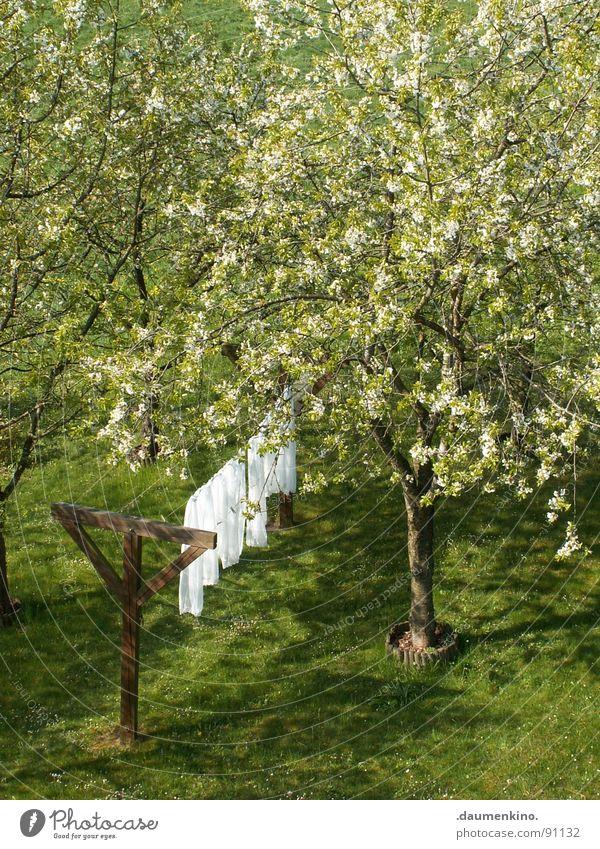 Weißer Riese Natur weiß Baum ruhig Blatt Wiese Blüte Frühling Garten Holz Wind rein Stoff Baumstamm sanft Wäsche