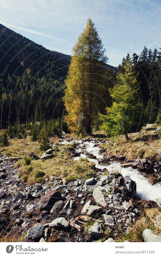 Herbst in den Bergen Natur Baum Landschaft Wald gelb Berge u. Gebirge Schönes Wetter Bach herbstlich Herbstfärbung Herbstbeginn Herbstwetter Herbstwald Wildbach
