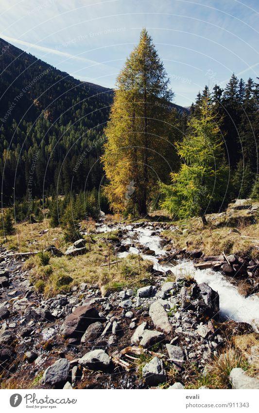 Herbst in den Bergen Natur Landschaft Schönes Wetter Baum Wald Berge u. Gebirge Bach gelb Herbstlandschaft Herbstfärbung Herbstbeginn herbstlich Herbstwetter