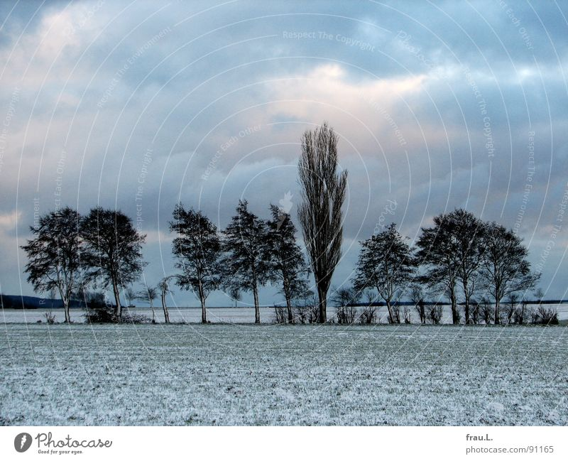 Wintertag Degersen ruhig Schnee Wolken schlechtes Wetter Baum Sträucher Feld Wald Wege & Pfade kalt Einsamkeit Pappeln Wäldchen Feldmark Heimat Spaziergang