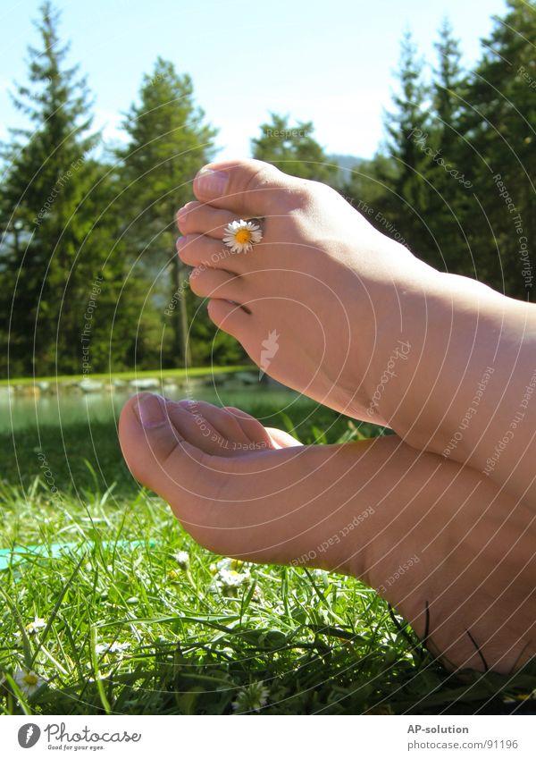 Füße mit Gänseblümchen Zehen Zehennagel sommerlich 2 Schuhsohle zierlich zart Physik Frau feminin Wald See Wiese Gras grün Hautfarbe Frühling Sommer Wohlgefühl