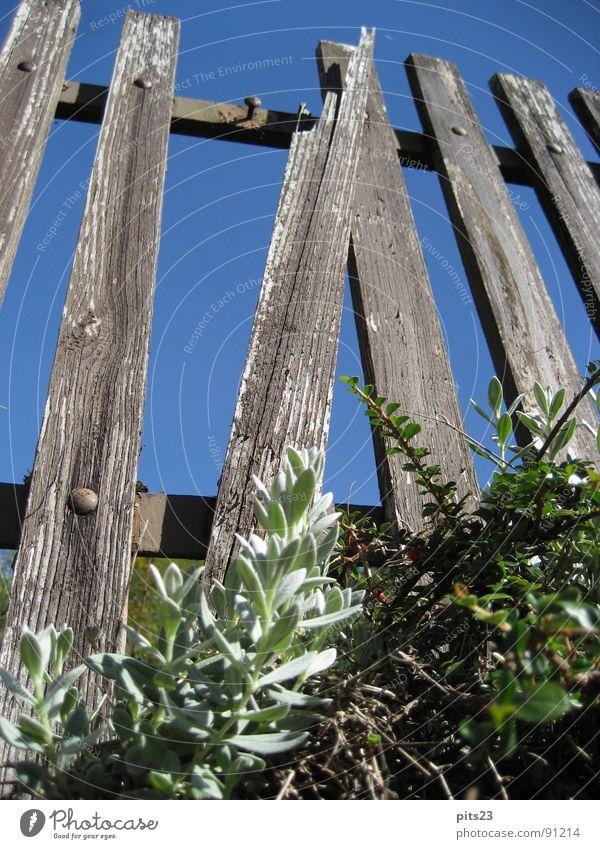 Am Zaun der Zeit Wiese Garten Holz Park Metall Grenze Holzbrett Lack Grundstück
