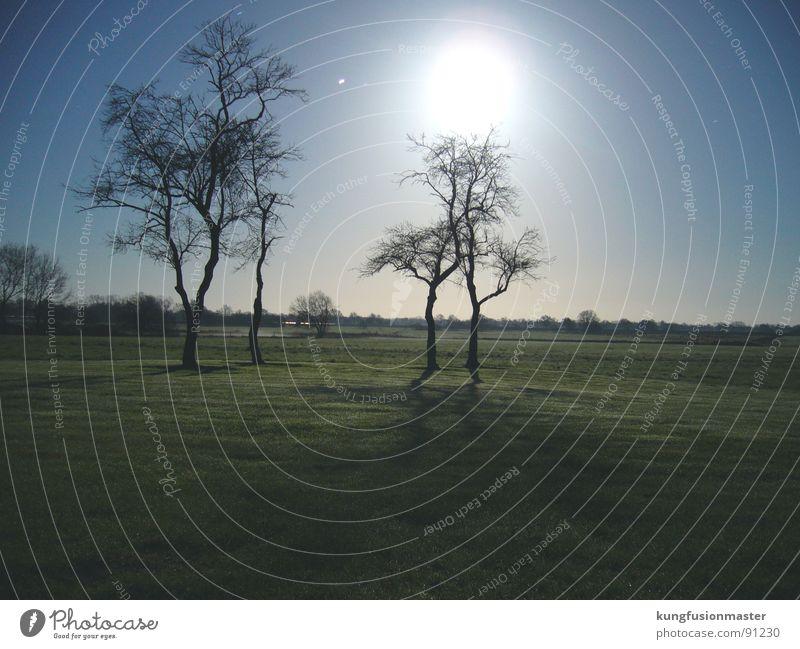mondnacht im dezember Baum Winter dunkel Wiese Gras Landschaft Mond Nachtaufnahme Niedersachsen Werwolf