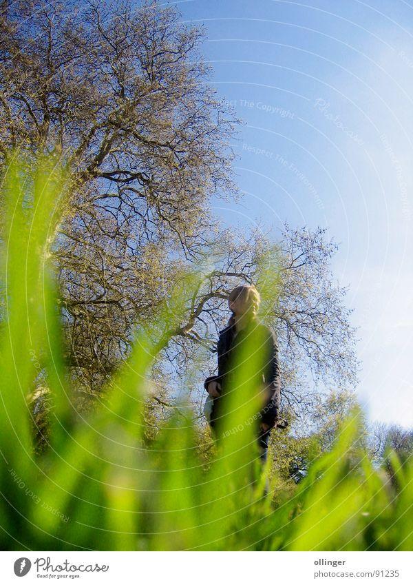 Beholder Frau Natur Himmel Baum Gras beobachten geheimnisvoll Versteck