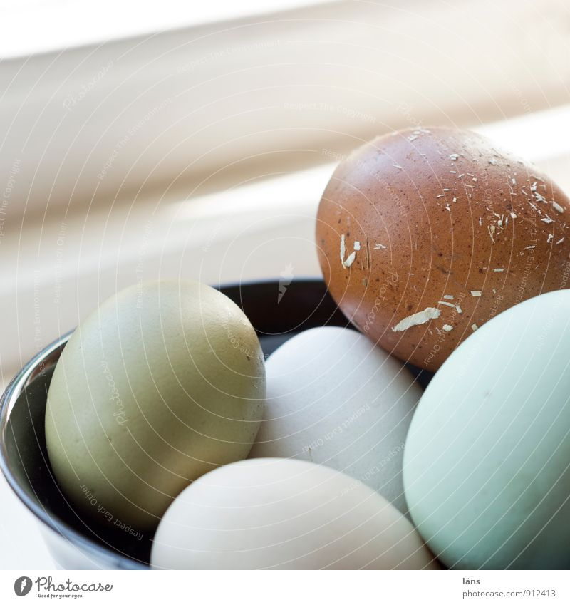 Landeier Lebensmittel Bioprodukte Schalen & Schüsseln rund Sicherheit Schutz Beginn Ei Biologische Landwirtschaft Auswahl Hülle Eierschale mehrfarbig Farbfoto