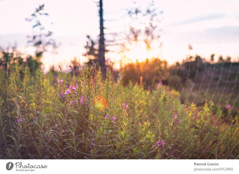 Sommerstimmung im Schwarzwald Himmel Natur Ferien & Urlaub & Reisen Pflanze Sommer Erholung Landschaft Berge u. Gebirge Umwelt Blüte Gras Stimmung Zufriedenheit Wetter Tourismus Sträucher