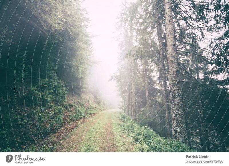 Nebelwald Wohlgefühl Zufriedenheit Sinnesorgane Erholung ruhig Ausflug Abenteuer Berge u. Gebirge wandern Umwelt Natur Landschaft Herbst Wetter