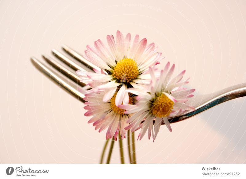Leichte Kost Blume Gabel Diät Sommer Vegetarische Ernährung lecker Mittag Wiese Hummel Biene Frühling Restaurant Bioprodukte Vitamin Gänseblümchen Festessen