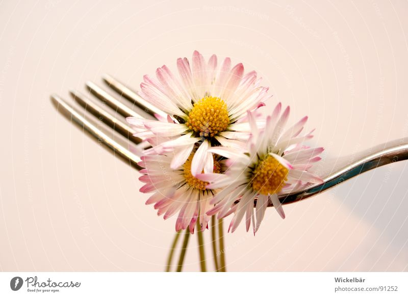 Leichte Kost Natur Sommer Blume Wiese Frühling Gesundheit Ernährung Wellness Besteck Gastronomie Biene Appetit & Hunger lecker Restaurant Bioprodukte Gänseblümchen