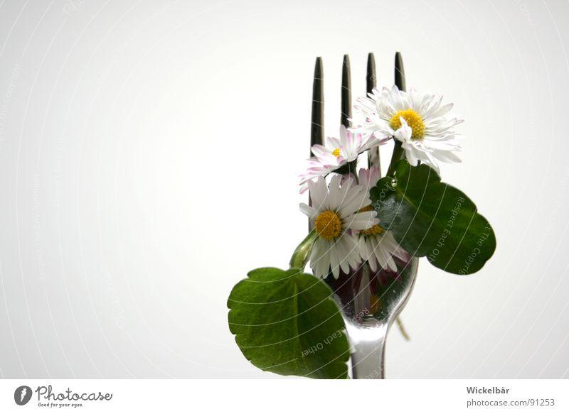 aufgegabelt........ Natur Sommer Blume Wiese Frühling Gesundheit Ernährung Wellness Gastronomie Appetit & Hunger lecker Bioprodukte Gänseblümchen leicht Diät