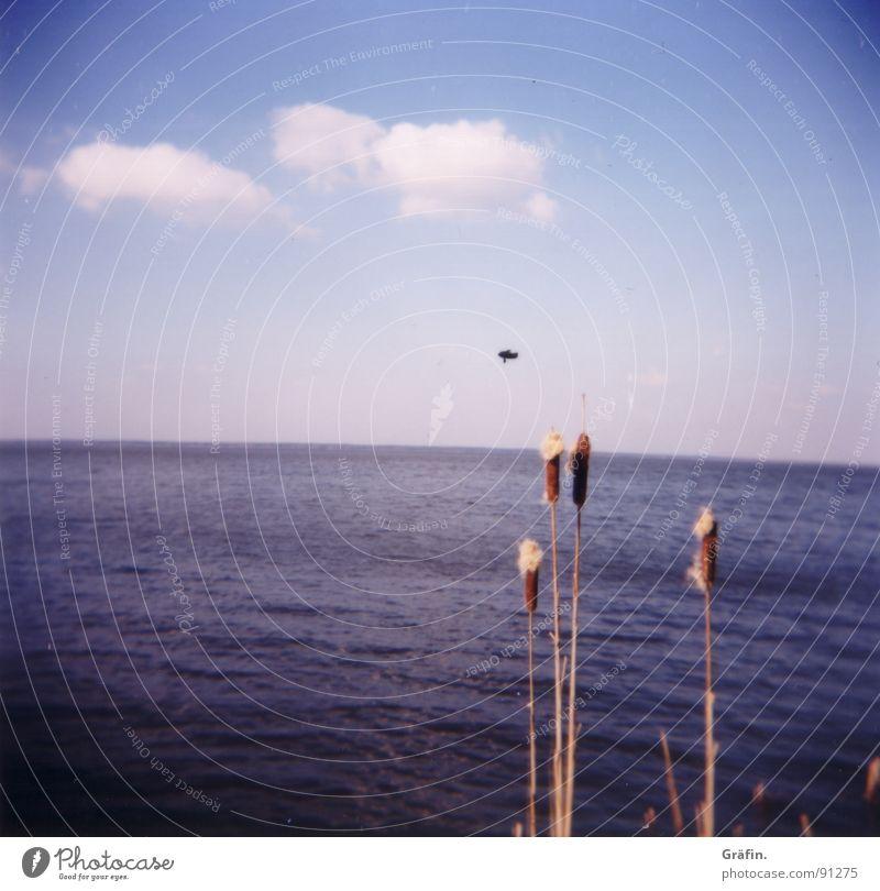 Rohr.... Himmel blau Wasser weiß Pflanze Meer Wolken Küste See Horizont braun Wellen Schilfrohr Fleck Hannover Vignettierung