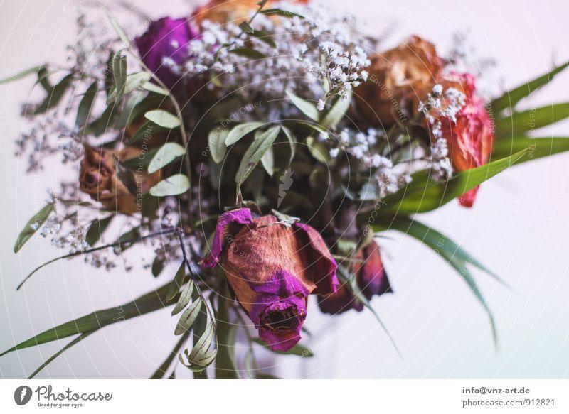 Blumenstrauß Pflanze Blatt Blüte Geschenk Rose welk dehydrieren Rosenblätter