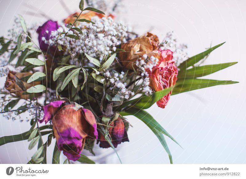Flower Pflanze Blume Blatt Blüte Geschenk Rose Blumenstrauß welk dehydrieren Rosenblätter