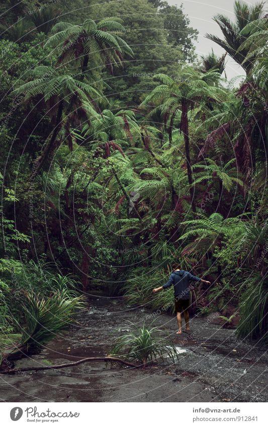 Jungle Mensch Natur Pflanze schön grün Baum Einsamkeit ruhig Tier Wald Umwelt Wetter Sträucher Abenteuer Fluss Sehnsucht