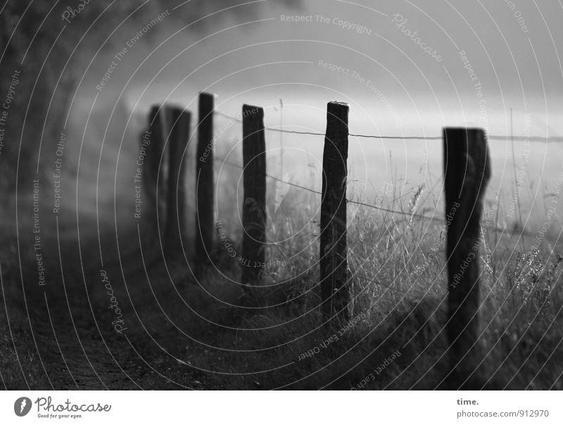 Grenzerfahrung Natur Baum Erholung Einsamkeit Landschaft Umwelt Leben Herbst Wiese Gras Wege & Pfade Stimmung Feld Nebel Schönes Wetter Schutz