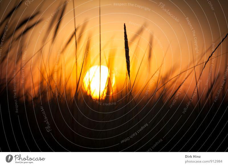 Sunset Natur Landschaft Sonne Sonnenaufgang Sonnenuntergang Sonnenlicht Schönes Wetter Gras Wiese Wärme Lebensfreude Warmherzigkeit Romantik schön Einsamkeit