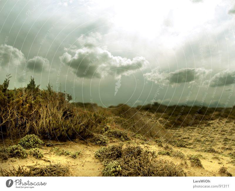 Einöde trüb trist Sträucher Wolken Erdton Unterwasseraufnahme Strand Sand Landschaft Himmel Sonne Ferne Erde Wüste Wurzel