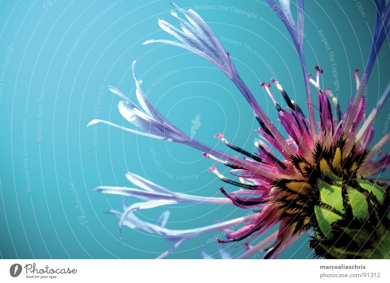 aquatic flower Natur blau Sommer Blume Frühling