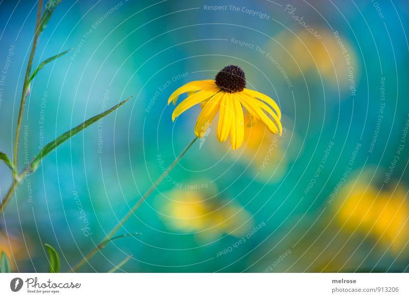 sea-breeze Natur Pflanze Himmel Sommer Schönes Wetter Blume Blüte Wildpflanze Sonnenhut Garten Park Wiese Erholung kalt blau braun gelb grün Fröhlichkeit