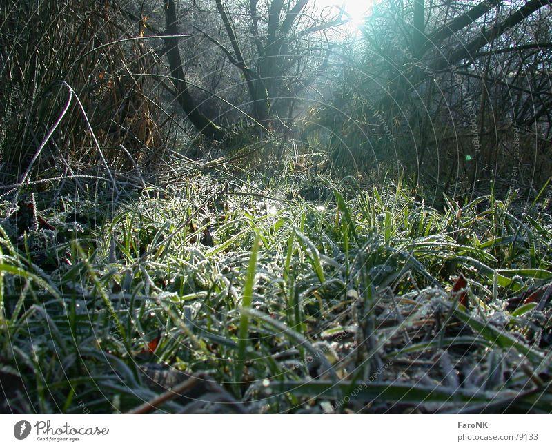 Urwald Baum Sonne Wald Gras